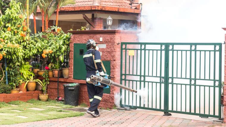 Pest Control service in dubai