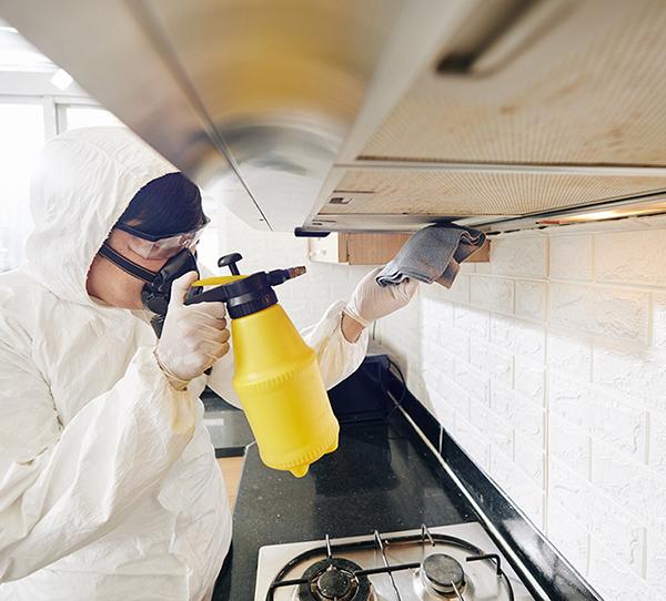 Get 24×7 Pest Control Services in Dubai